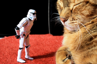 Stormtrooper VS chat. [CC BY-NC-SA 2.0 Stéfan]