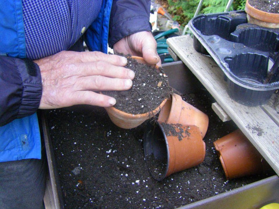 Remplissage des pots de 10 cm de terre, sans tasser. [Isabelle Gendre - RTS]