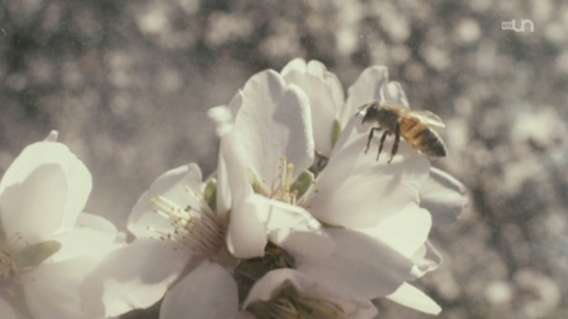 Des mains chinoises remplacent les abeilles