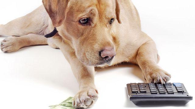 Le montant de l'impôt pour les chiens varie considérablement d'un canton à l'autre. [malexeum - Fotolia]