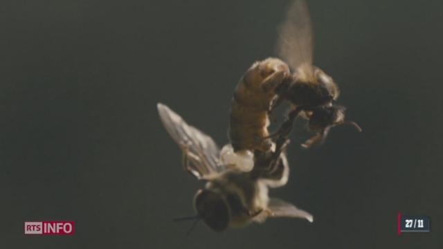 Le film événement de Markus Imhof sur la disparition des abeilles sort le 28 novembre