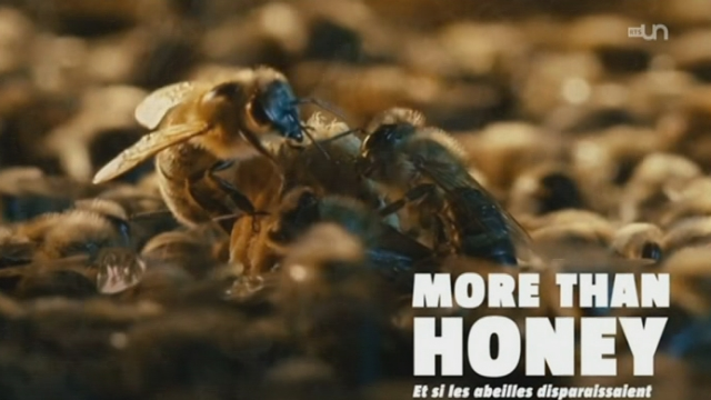 "Le film ""More Than Honey"" rencontre un énorme succès"