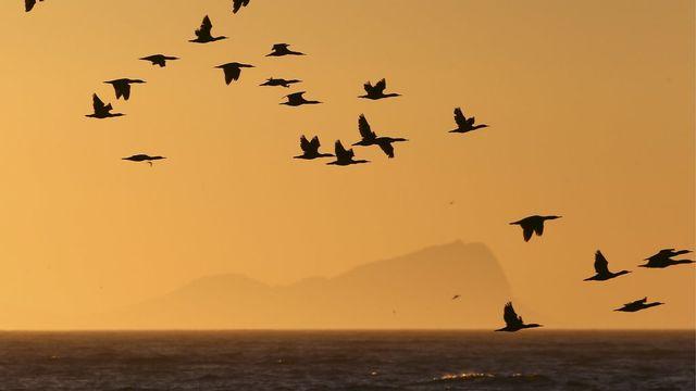 Le solstice d'hiver a aussi été franchi sans encombres à Cape Town, en Afrique du Sud, où les cormorans continuent à voler sans souci. [Nic Bothma - Keystone]