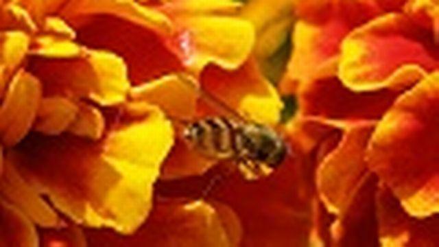 Société romande d'apiculture [© Thierry Hoarau - Fotolia.com]