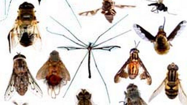 Les insectes nuisibles prennent le bateau