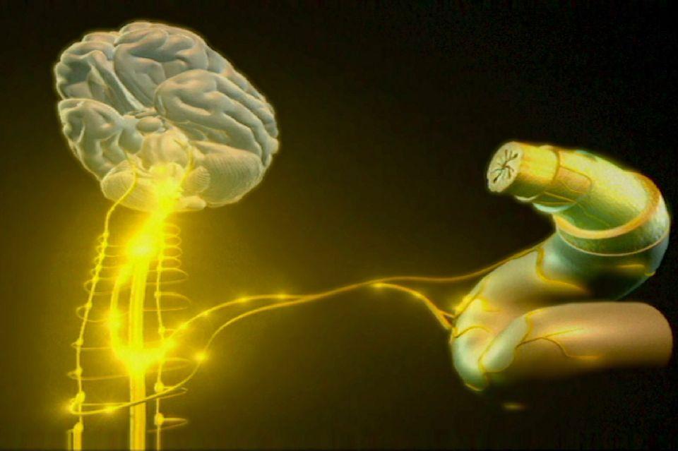 Les scientifiques viennent de découvrir un nouvel organe composé de bactéries. [RTS]