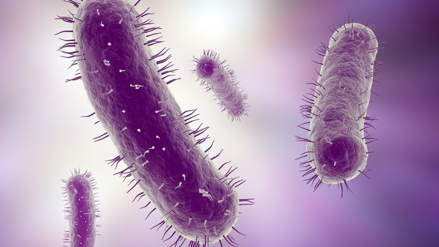 Microbes  [© Mopic - Fotolia]