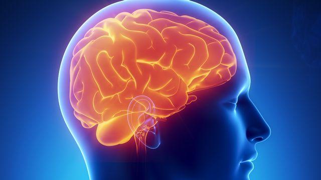 Le Human Brain Project de l'EPFL va bénéficier de fonds européens. [Fotolia]