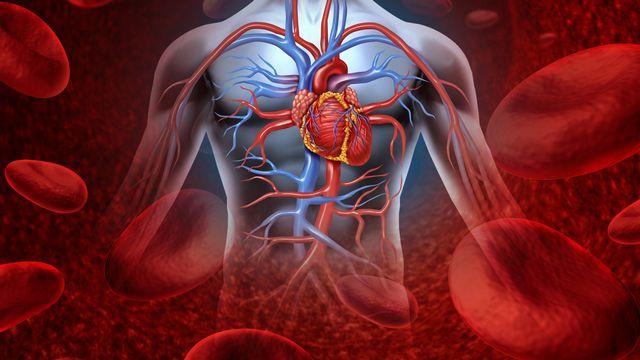 Sang, coeur, système sanguin [ © freshidea - Fotolia]