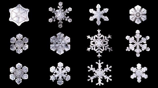 Cristaux de neige photographiés par Wilson Bentley, un fermier fasciné par leur forme. [Wikipédia]