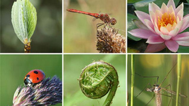 Accroche biodiversité  [© Yü Lan - Fotolia]