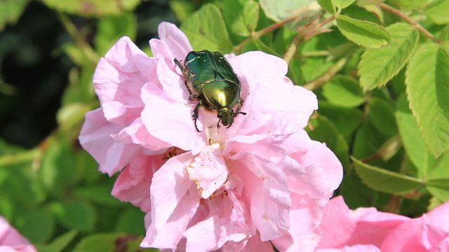 Biodiversité [© chanelle - Fotolia]
