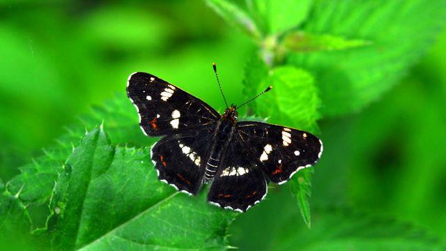 Biodiversité [© Aynia - Fotolia]