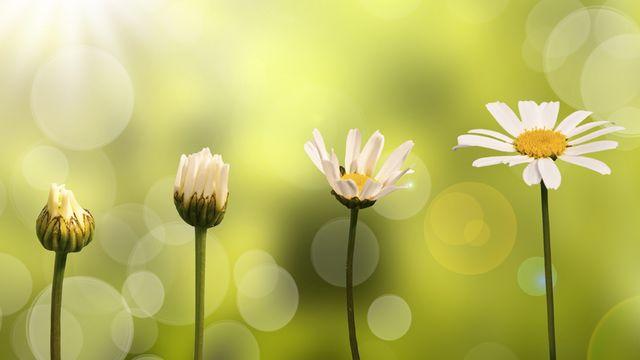 Fleurs [© Delphimages - Fotolia]