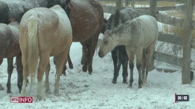 De graves manquement au respect du cheval ont été découverts dans plusieurs pays