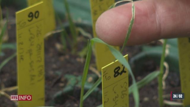 Le Conseil fédéral souhaite lever le moratoire sur les OGM dès 2018