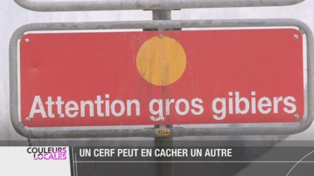 Gruyère (FR): attention aux cerfs qui traversent la route