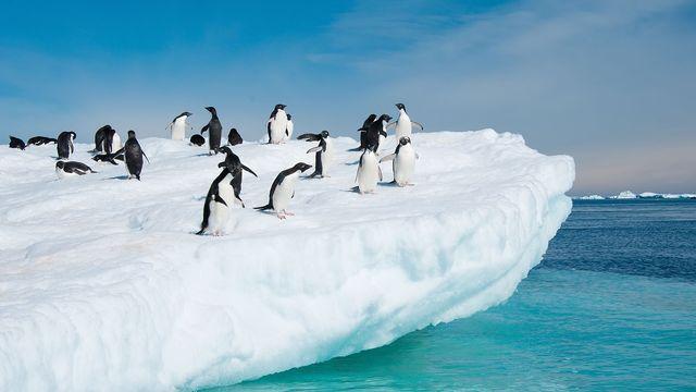 La faune et la flore de l'Antarctique sont régis par des lois très strictes. [axily - Fotolia]