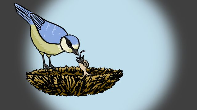 Comment les oiseaux apprennent-ils à voler ? [RTS]