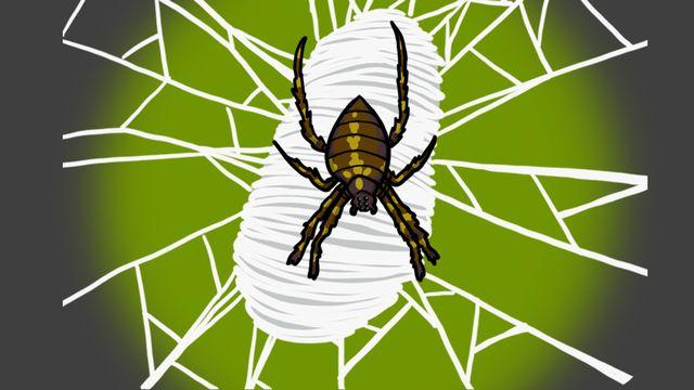 Question sur... Pourquoi les toiles d'araignées sont-elles si résistantes? [RTS]