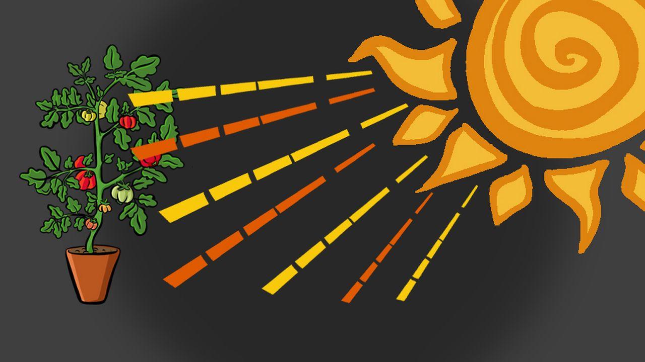 Comment utilise-t-on l'énergie issue du soleil? [RTS]