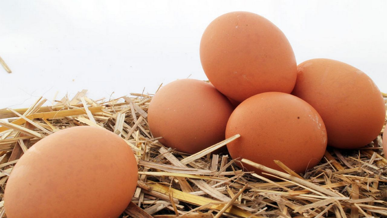 La Romandie est frappée d'une pénurie d'œufs. Katherine_gee Fotolia [Katherine_gee - Fotolia]