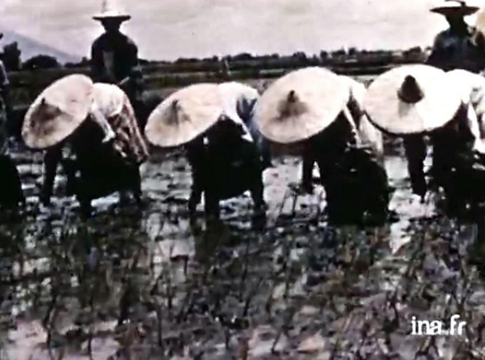 """""""Le riz et la santé"""".  [INA]"""
