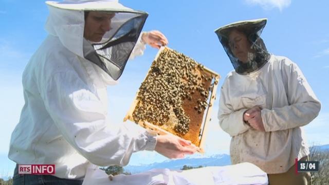 L'apiculture fascine de plus en plus en Suisse [RTS]