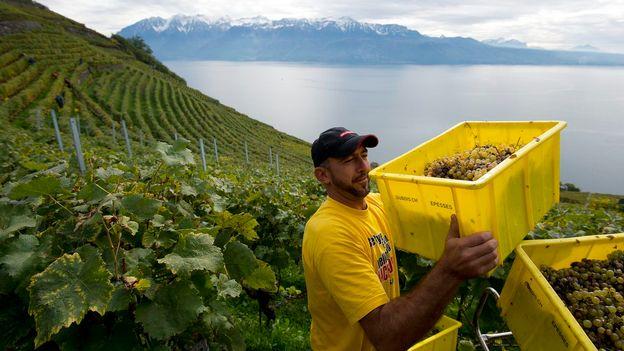 InterCités - L'oenotourisme pour redresser la viticulture romande