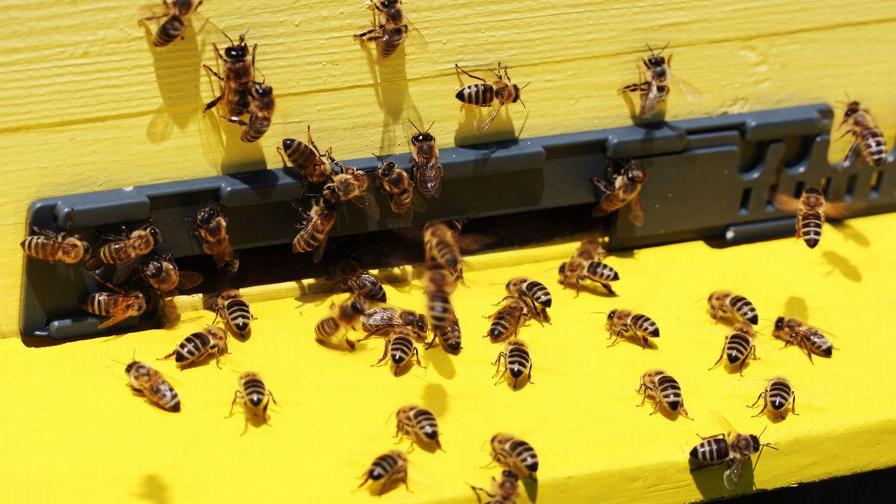 Entrée d'une ruche. [© Marjan Veljanoski - Fotolia]