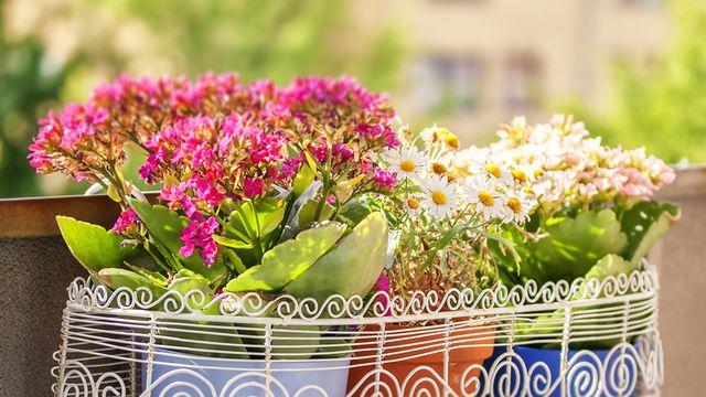 Fleurs [©feferoni - Fotolia]