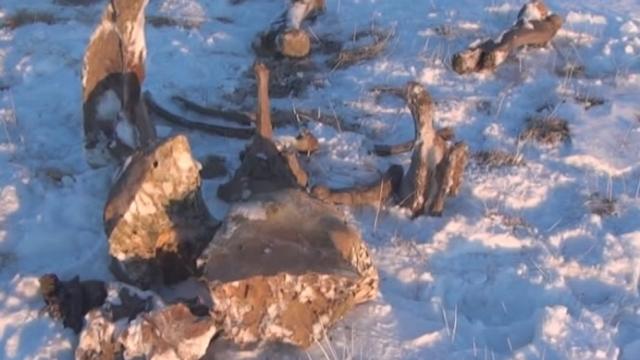 Un mammouth découvert avec son sang [RTS]