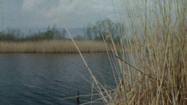 Le lac de Morat en 1982. [RTS ]