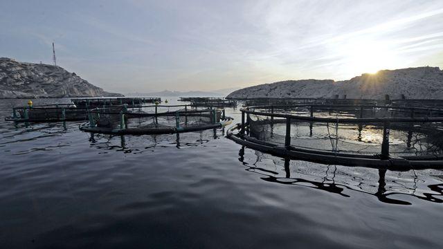 Installations aquacoles [Boris Horvat - AFP]