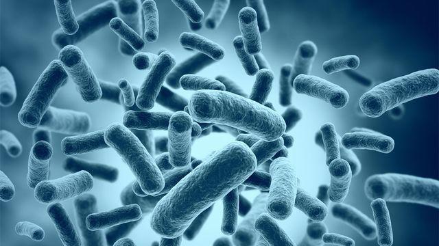 Notre corps porte près de deux kilos de bactéries. Jezper Fotolia [Jezper - Fotolia]