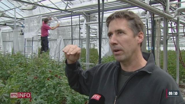 Un producteur de fleurs romand est primé par la fondation suisse pour le climat [RTS]
