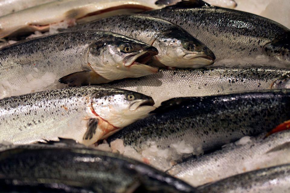 Saumons d'élevage [AFP]