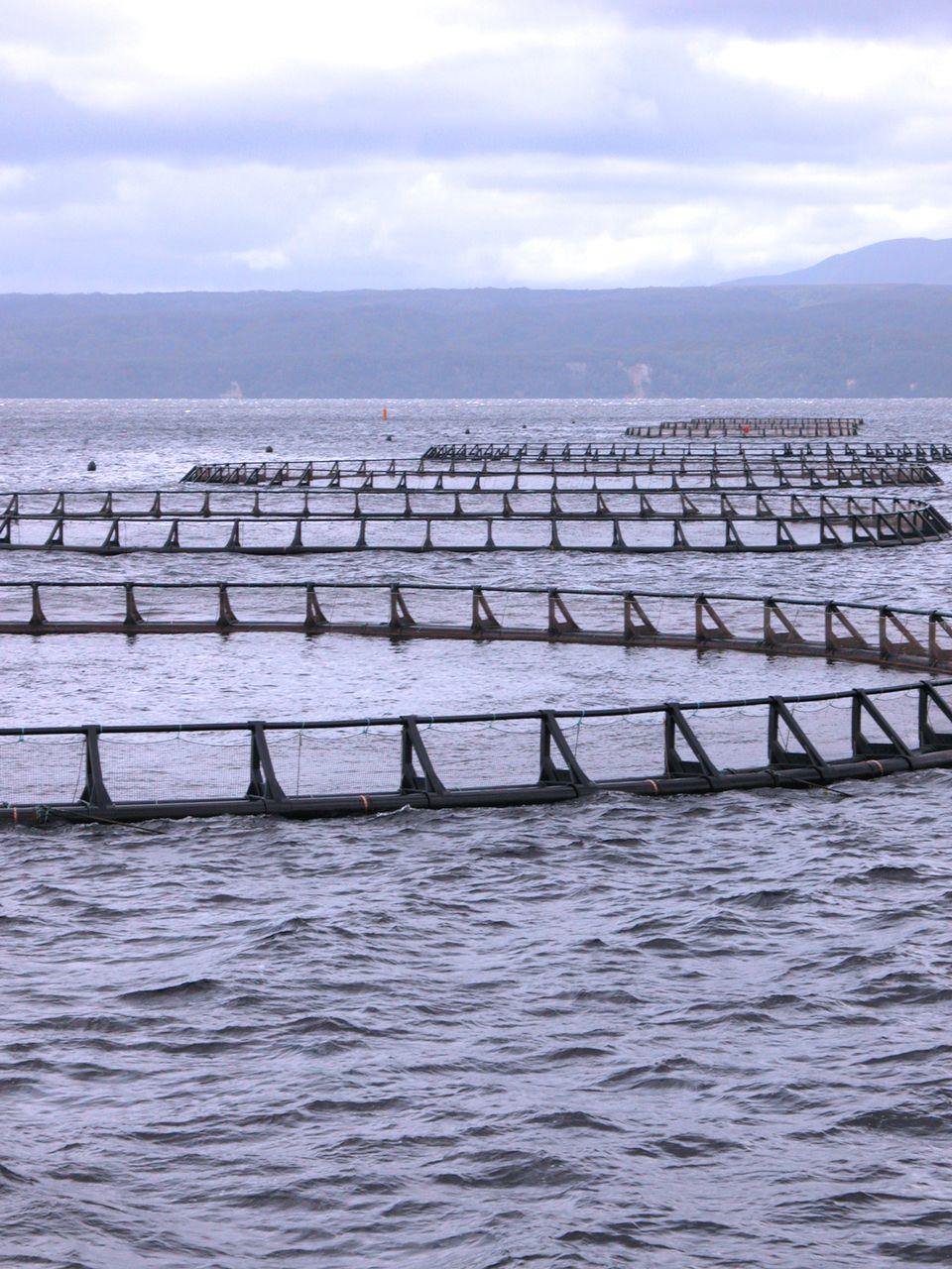 Ferme à saumon écossaise. [Fotolia]