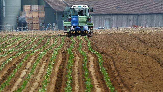 Uniterre lance un référendum contre la Politique agricole 2014-2017. [Steffen Schmidt - Keystone]
