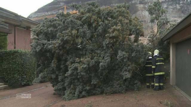 Dégâts à Veyrier (GE) en raison de la tempête [RTS]