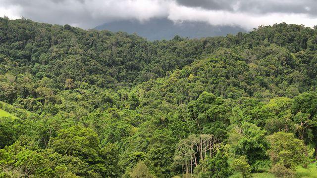 Certaines forêts du globe comptent jusqu'à 200 espèces d'arbres par hectare. Ralph Loesche Fotolia [Ralph Loesche - Fotolia]