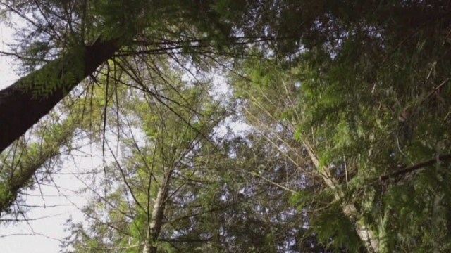 L'Arboretum d'Aubonne [RTS]