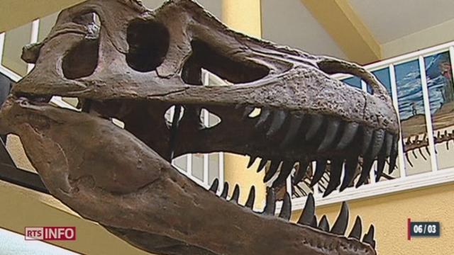 Une nouvelle espèce de dinosaure a été découverte [RTS]