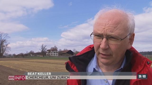 Les essais d'OGM en plein air reprennent près de Zurich [RTS]