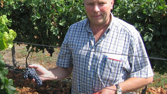 Renaud Burnier dans son vignoble de Natouhaevskaya, sur les pentes douces et ensoleillées du Caucase russe. [domaines-burnier.com]