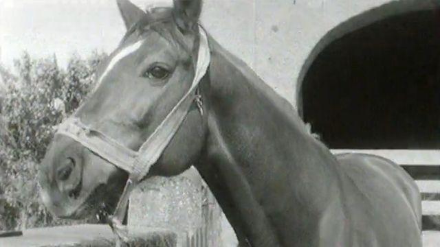 Les chevaux sont nombreux à Genève en 1964. [RTS]