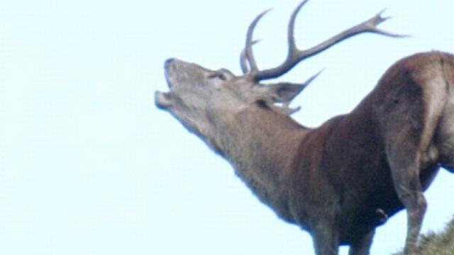 Dans le parc national des Grisons. [RTS]