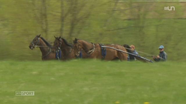 Le Mag: les chevaux de courses sont traités comme de véritables athlètes [RTS]