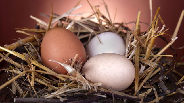 D'où vient la couleur des œufs? Ddsign Fotolia [Ddsign - Fotolia]