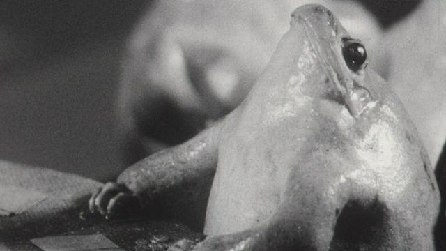 Une résidente du Musée des grenouilles d'Estavayer-Le-Lac, en 1965. [RTS]
